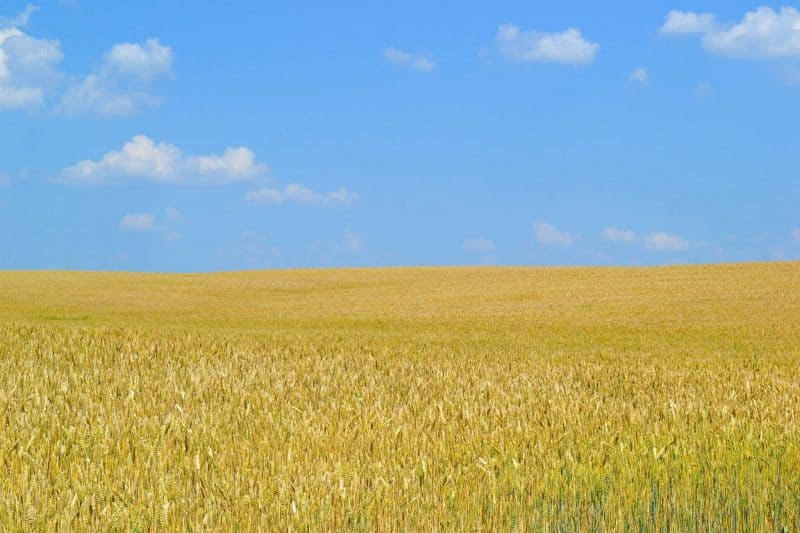 Ukrainian Government to Start Blockchain Land Registry Trial in October